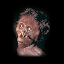 """10. Находка """"Люси"""" - предок человека?"""