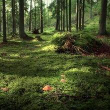 Адские духи лесной поляны